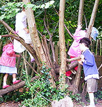 Kindergarten Children Climbing Trees